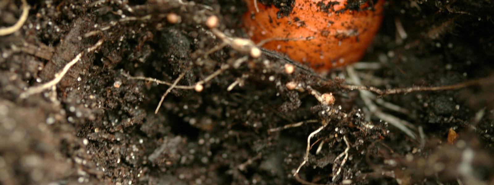 Découvrir les mycorhizes